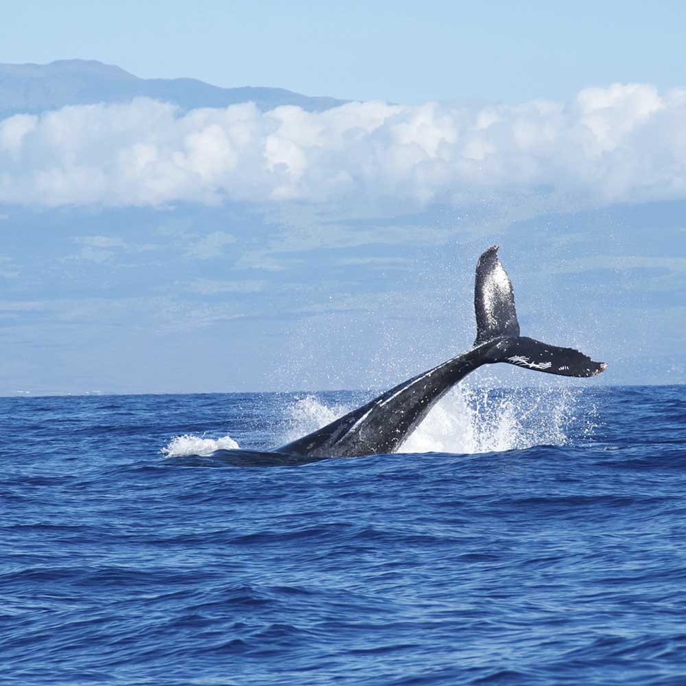 Синий кит и красная сова. Что это?